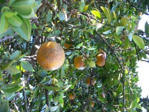 Slow Food festeggia 25 anni anche in Liguria