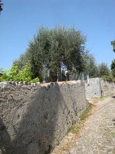 Aromatica: erbe, basilico e profumi del Ponente