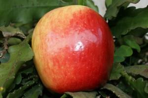 Settembre, il tempo delle mele (in torta)