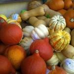 zucche autunno