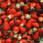 Chandler_strawberries